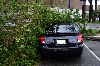 A tree fallen against Aaron's car / back view