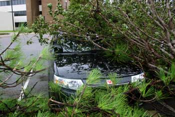 A tree fallen against Aaron's car / front view